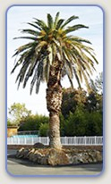 Mobile home parks in Oroville, CA enjoy beautiful weather year round.